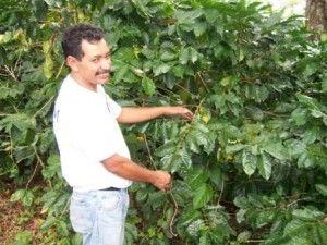 Diego-showing-coffee-tree