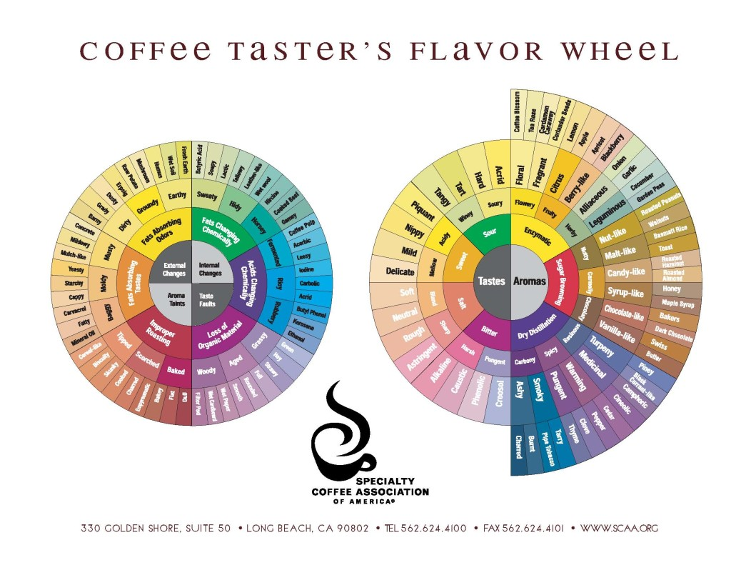 Coffee Tasters Flavor Wheel